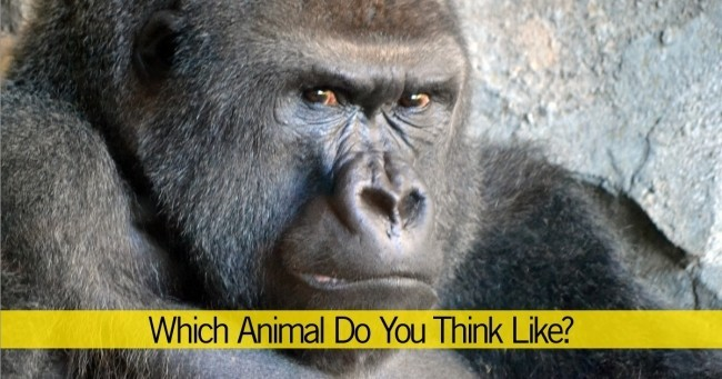 Which Animal Do You Think Like?